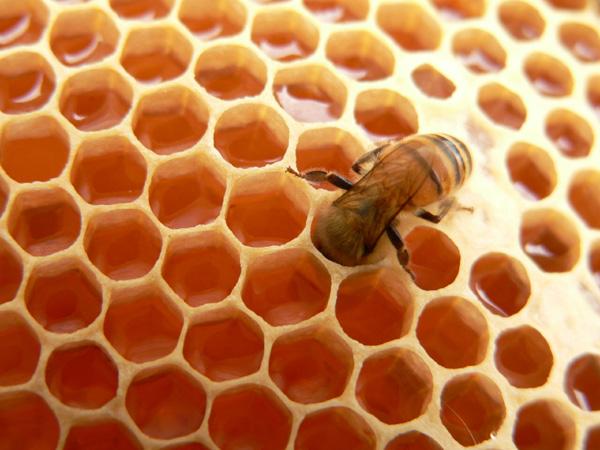 Ý nghĩa và đánh xổ số con gì khi mơ thấy ong