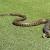 Điềm báo của giấc mơ thấy rắn đuổi tốt hay xấu