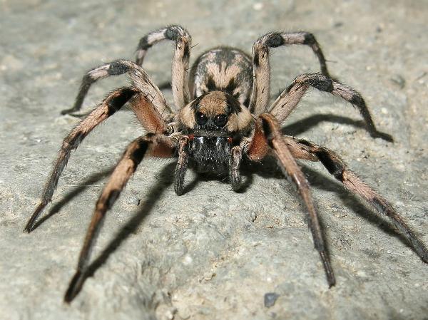Nằm mơ thấy nhện có ý nghĩa gì nên đánh xổ số con gì