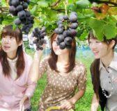 Mơ thấy hái trái cây đánh con gì, ý nghĩa chiêm bao thấy hái trái cây